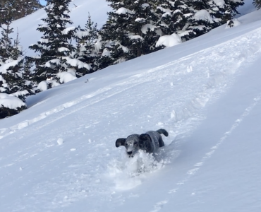 Paddie's First Backcountry Experience